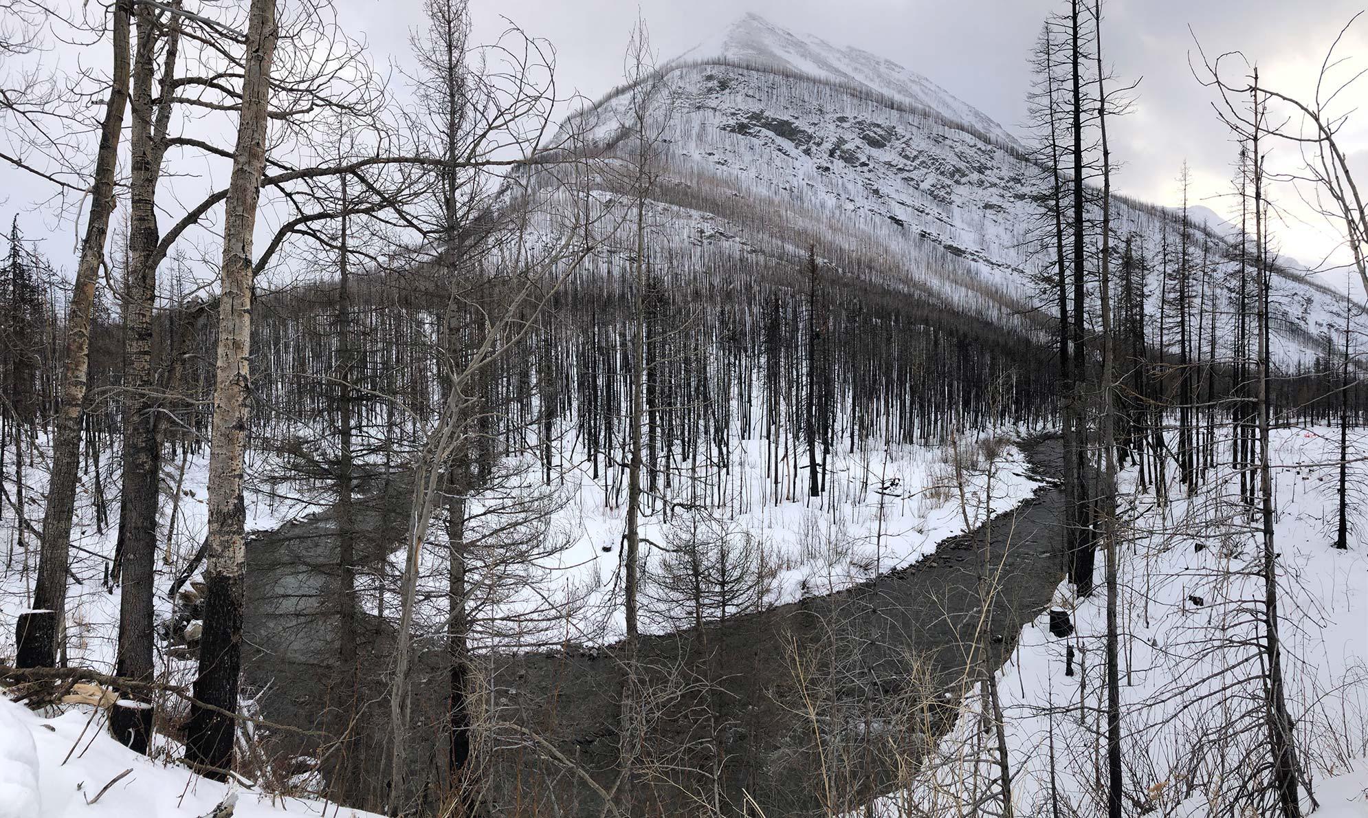 Winter Scenery in Waterton
