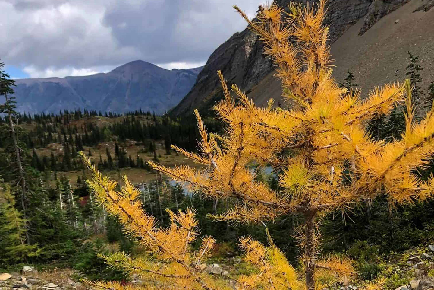 "Featured image for ""Larch Madness"""